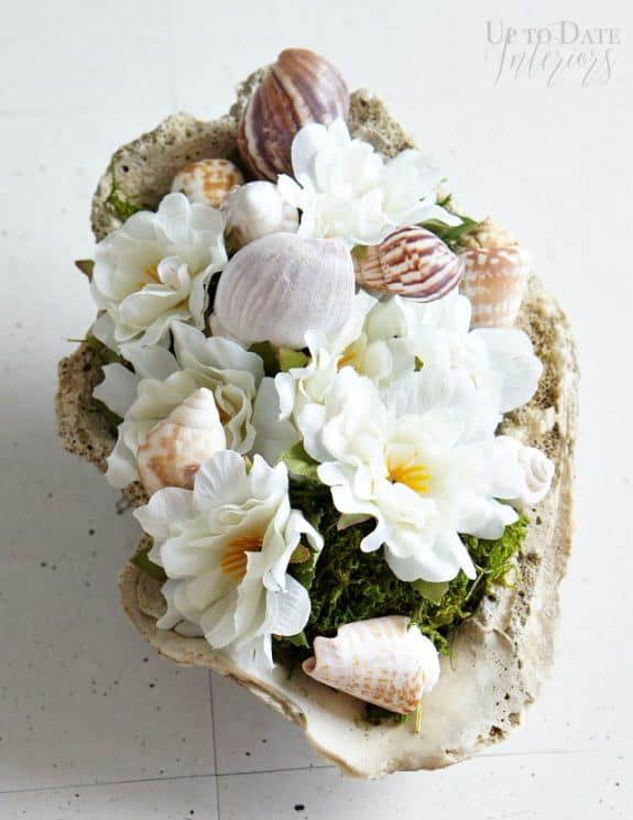 sea-shell-flowers-moss-shells
