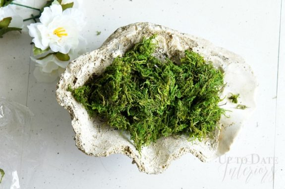 sea-shell-moss