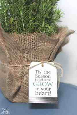 Mini Christmas Tree Gift Idea - from overthebigmoon.com!