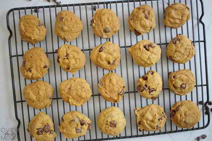 A black cooling rack that has two dozen pumpkin chocolate chip cookies on it.
