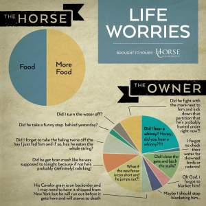 Life worries: horse, food and more food; owner, a bunch of different things