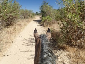 Rider's view of horse's neck and head, dirt trail, scrubby vegetation