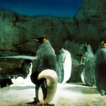Travel Photography – Penguins in the Osaka Aquarium