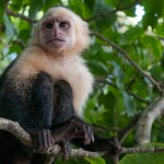 Manuel Antonio National Park: Monkeys, Raccoons, and Thieves – OH MY!