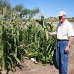 Bill harvesting ear of corn
