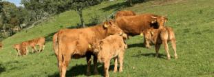Vacuno de carne