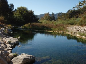 A holding pool on the Ventura River like the ones at the new Ventura River Steelhead Preserve.  These pools provide a sanctuary for the steelhead when other parts of the river are dry.  When the river fills the fish continue upstream to propagate.
