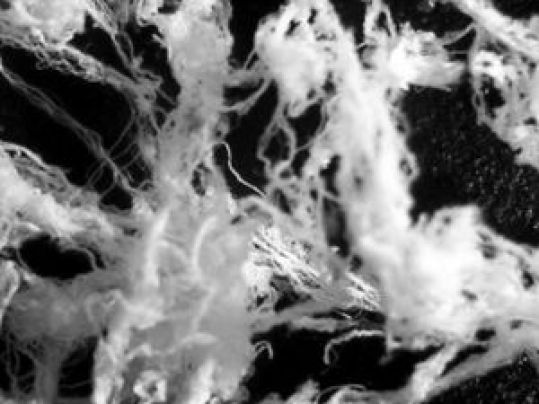 Investigadores de Portugal estudaram 'cabelo de anjo' que caiu após avistamento de OVNIs