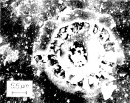 vida alienígena na Lua