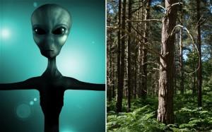 alien_2596377b