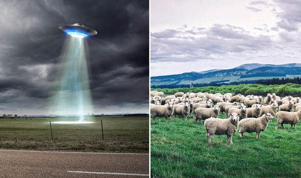 Um produtor de filmes documentários alegou que um rebanho de ovelhas que desapareceu foi abduzido por alienígenas.