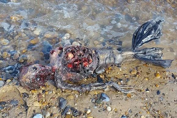 Suposto cadáver de sereia é encontrado em praia da Inglaterra 1