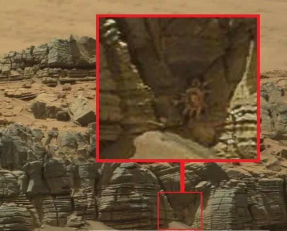 bactérias em Marte