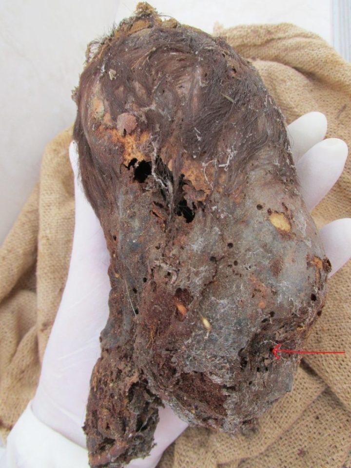 Este é o crânio alongado mais impressionante já encontrado no Peru 2