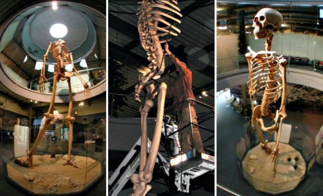 esqueletos de gigantes