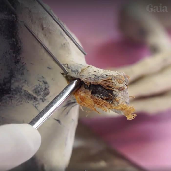 Nova múmia anômala de Nazca é revelada para a Internet (e outras informações) - ATUALIZADO 2