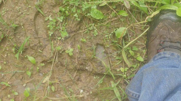 Possível impressão da mão de um bigfoot é encontrada na Pensilvânia, EUA 1