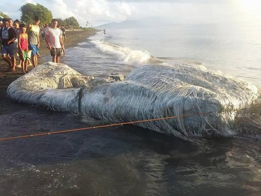 carcaça peluda aparece em praia das Filipinas