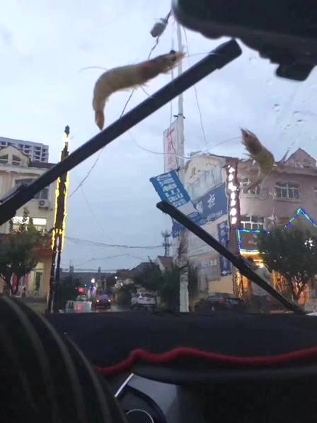 Criaturas marinhas caem do céu durante tempestade na China 3