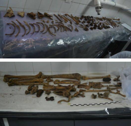 Veja quem estava dentro do gigantesco sarcófago negro