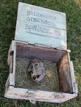 Fazendeiro búlgaro encontra crânio estranho em caixa
