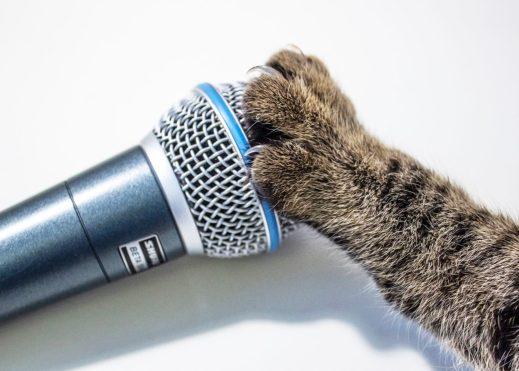 мяукать при пении, приемы вокала, тванг, тванг вокал, вокальный нос, тванговый звук, носовой призвук, пение тванг, твенг, твэнг, петь твангом, назальный тванг, носовой тванг, техника тванга, гортанный тванг, оральный тванг, как петь твангом, что такое тванг, примеры тванга, тванг в вокале, мяу вокал, мяу распевка, мяу пение