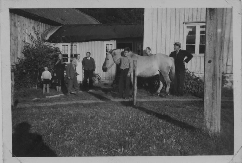 Fra tunet på gården til Kristian Horrisland - Leif holder hesten.