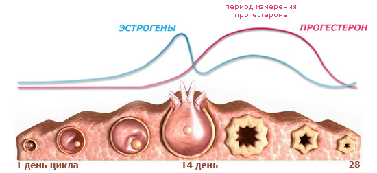 Гормональные нарушения: симптомы и состояния