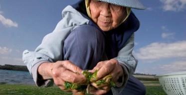 940_Okinawa-300x153 Day in the Life: Ushi Okushima