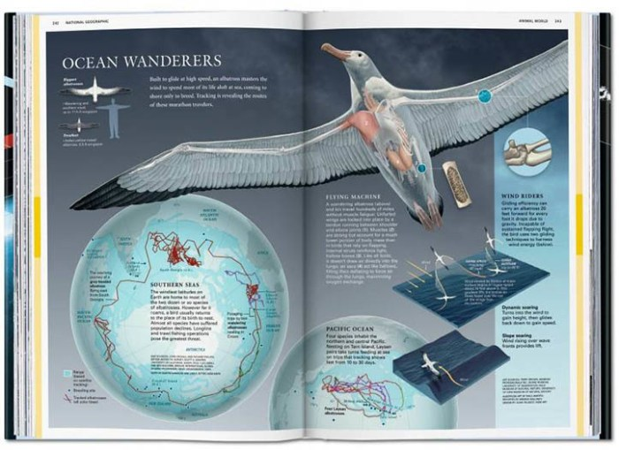 national_geographic_infographic_tacshen_int_1