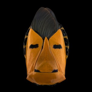 pascal-goet-insect-mask-6