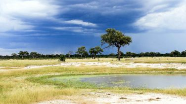 Zimbabwe-Hwange-NP-Hi-Res-IMG_2382-Photo-credit-Will-Whitford-1920x1080