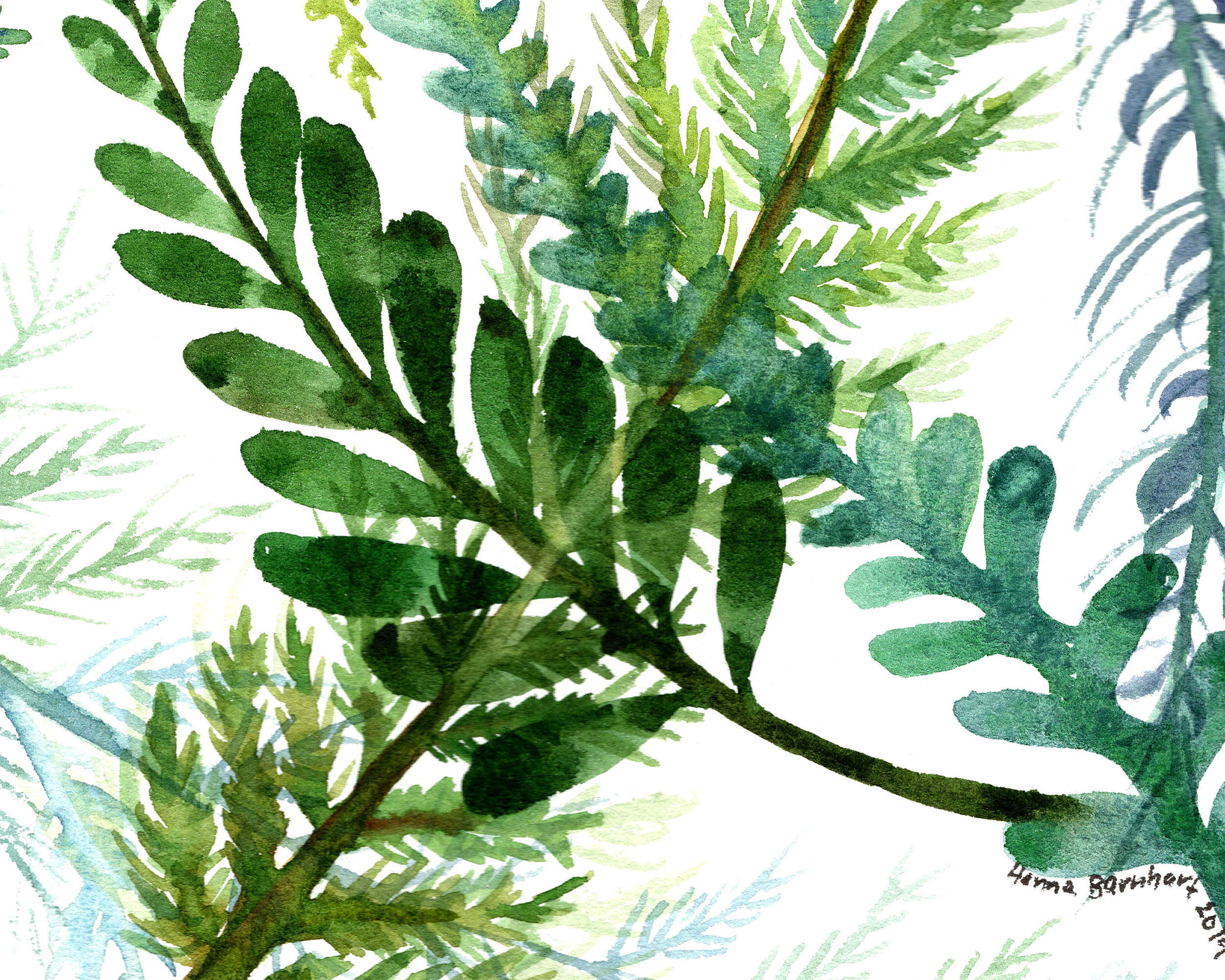 fern overlay detail