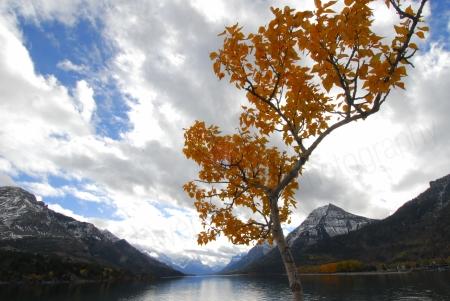 yellow-tree-and-lake.jpg