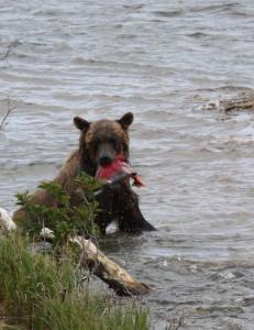 The bears were stuffed, but they kept eating. Photo by Cynthia Beckwith.