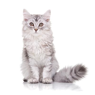 Kitten dierencasting