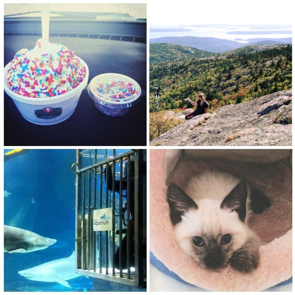 My favorite things, ice cream with sprinkles, maine, my cat and shark diving!