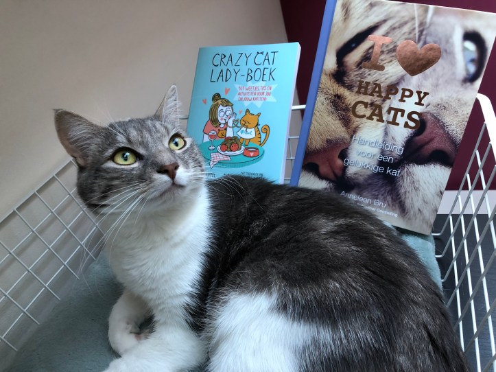 Blogmas 7: my cat Frits 1