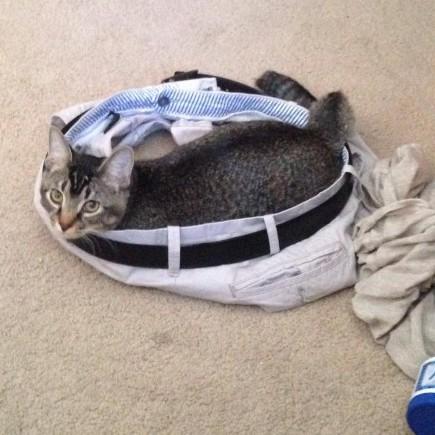cat_circle (10)