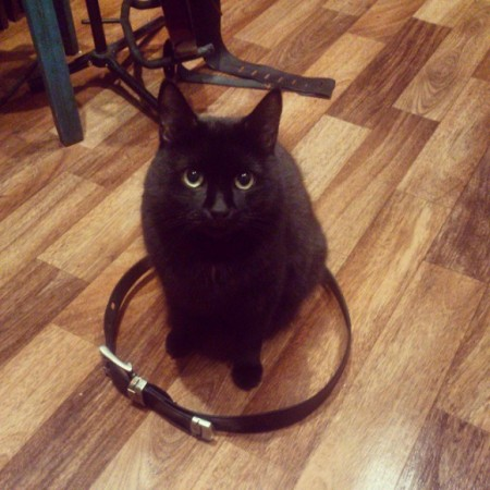 cat_circle (19)