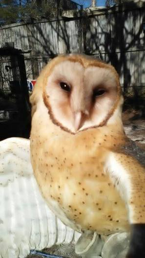 Young Barn Owls Arrive at Nature's World