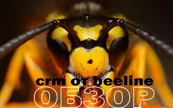 Обзор CRM от Beeline: плюсы и минусы системы
