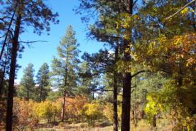 Pagosa National Forest