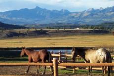 Upper hwy 84 pagosa horses ranch