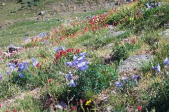 Pagosa wildflowers