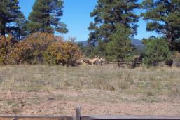 Chris Mountain Ranch land