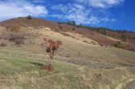 Emerald Lake Hills