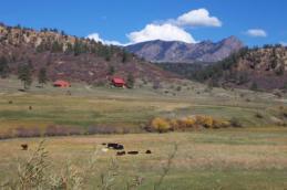 Navajo Ranch Plains