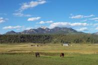 pagosa peak estates grazing animals