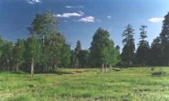 rito blanco meadow